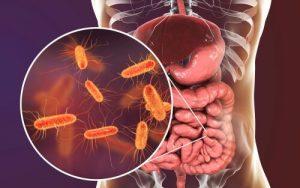 Microbioma cerebral: bactérias intestinais no cérebro humano